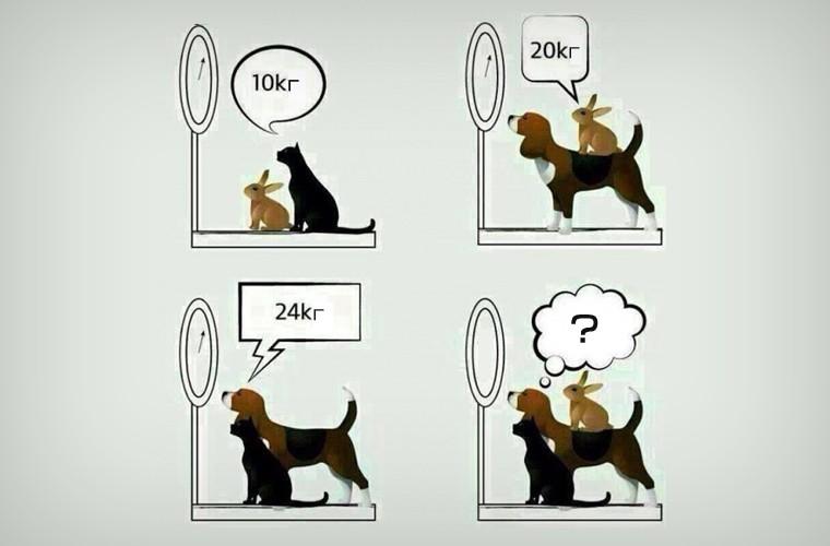 Загадка про весы и животных