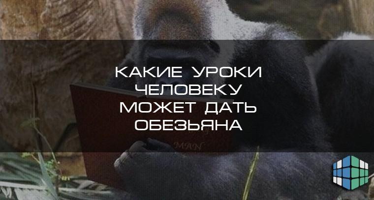 Какие уроки человеку может дать обезьяна