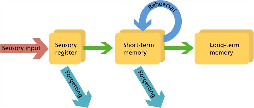 Что такое рабочая память и как ее улучшить