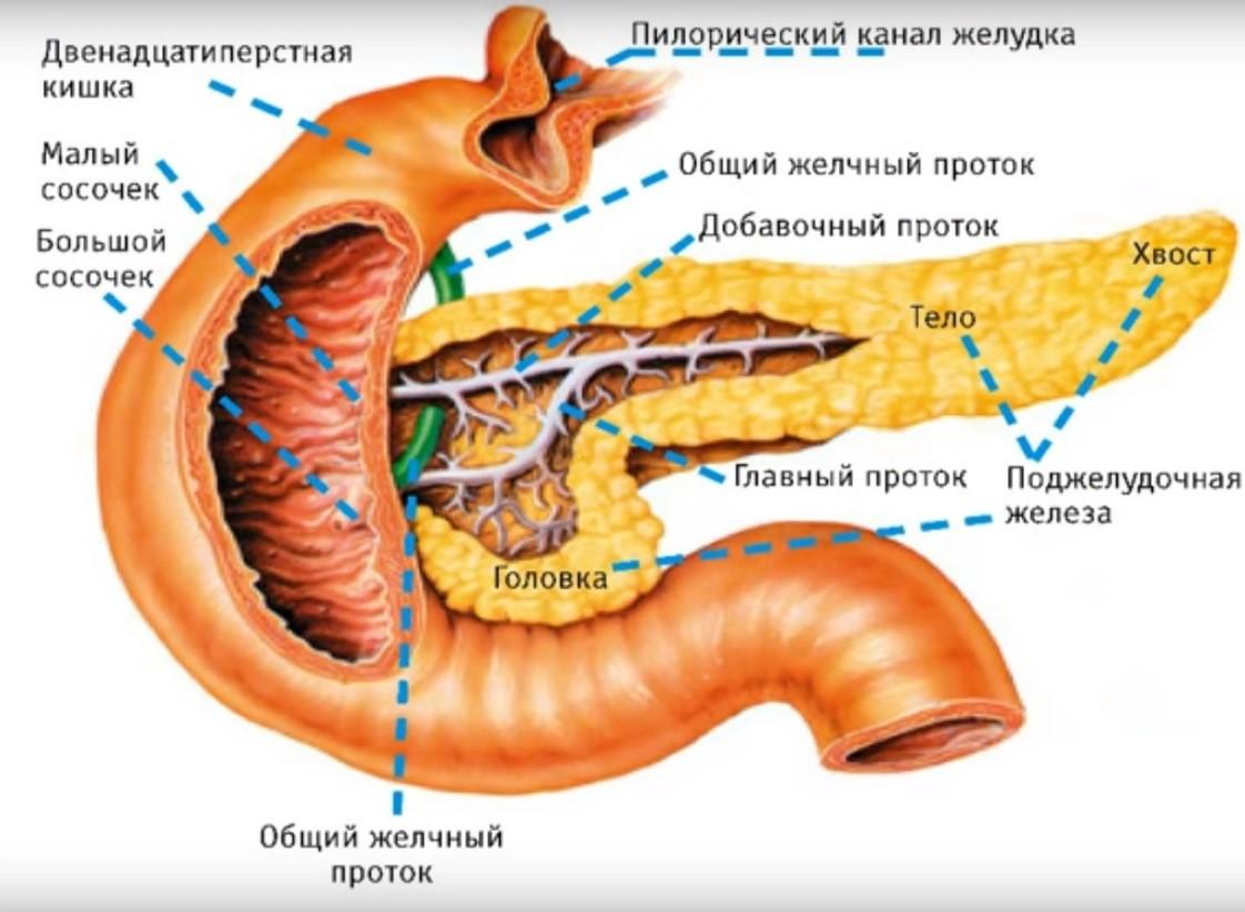 Попадание непереваренной пищи в толстый кишечник